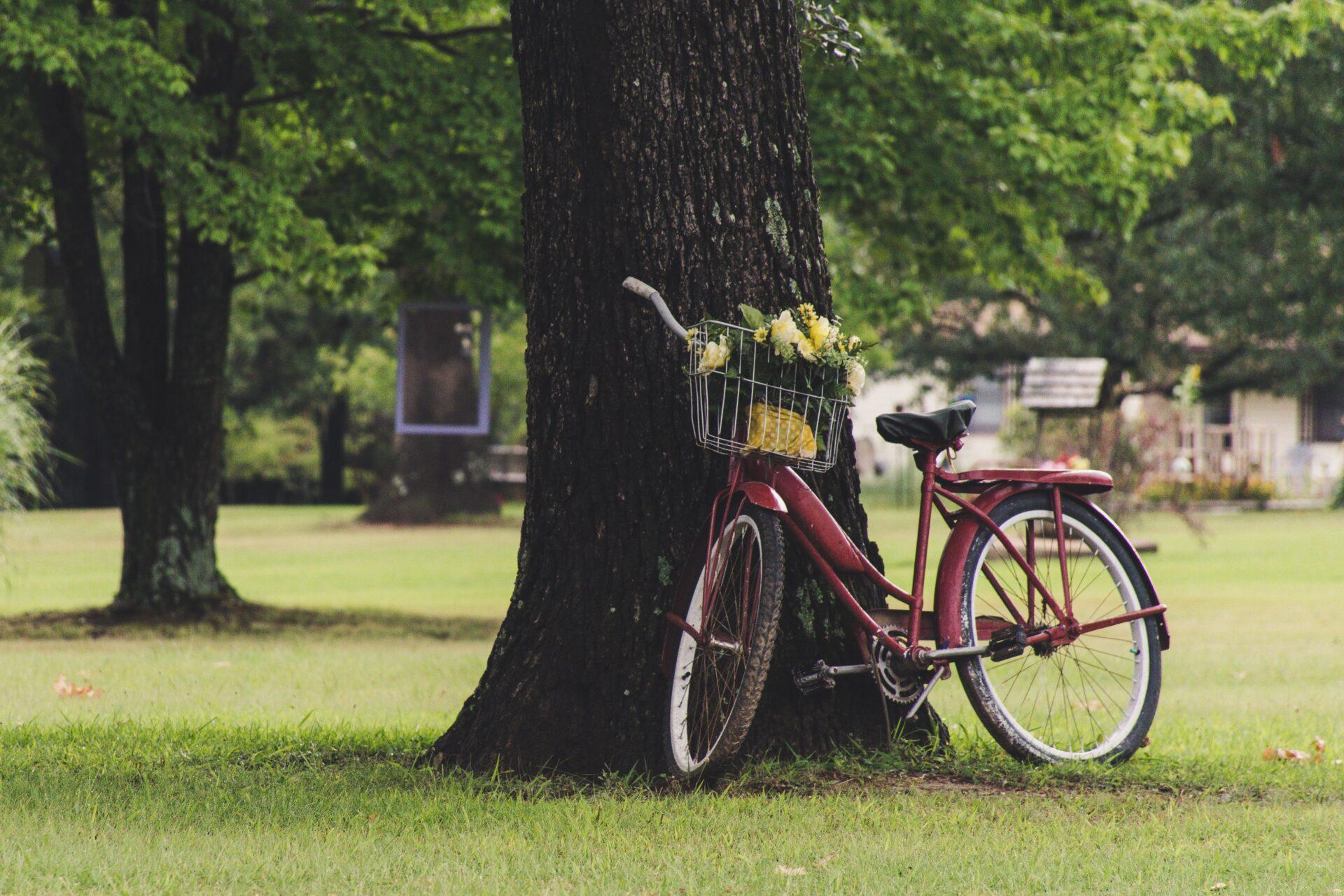 Bike im Grüne